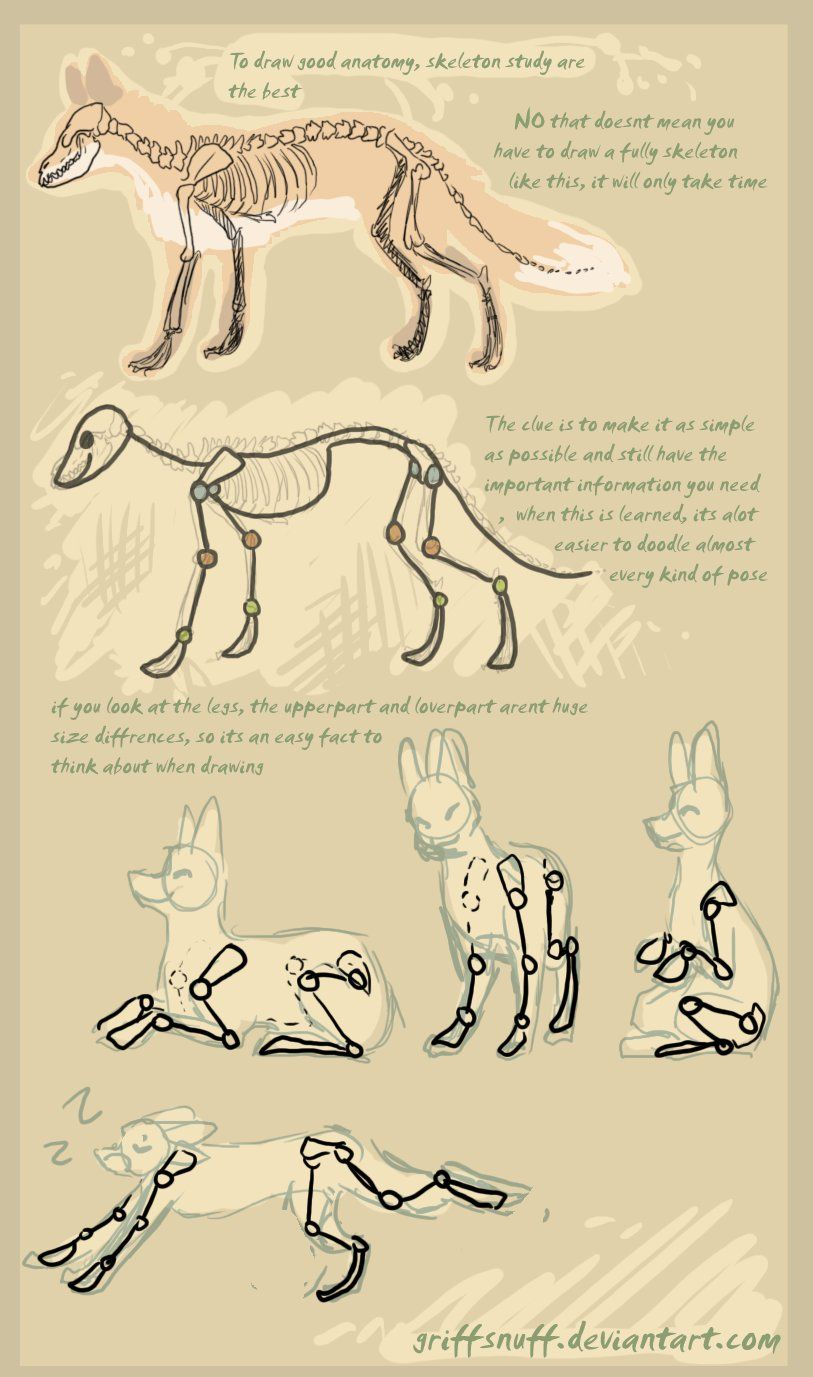 fox doodle tutorial by griffsnuff | Drawing How-To | Pinterest ...