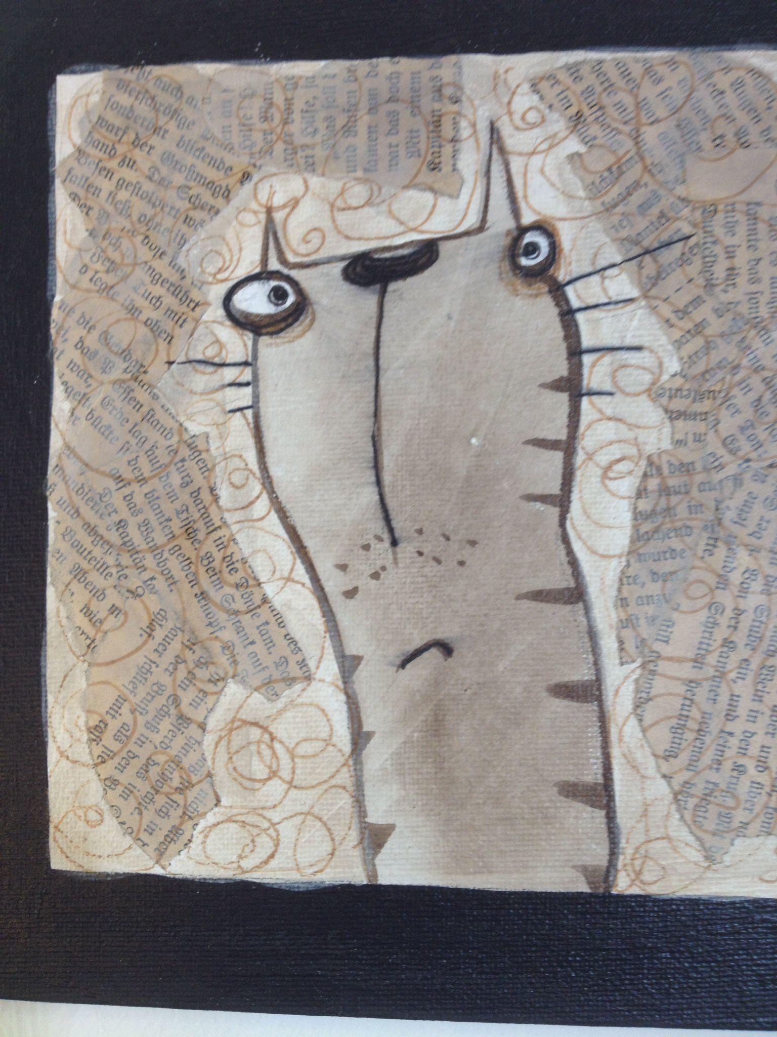 Katzen Bauchnabel