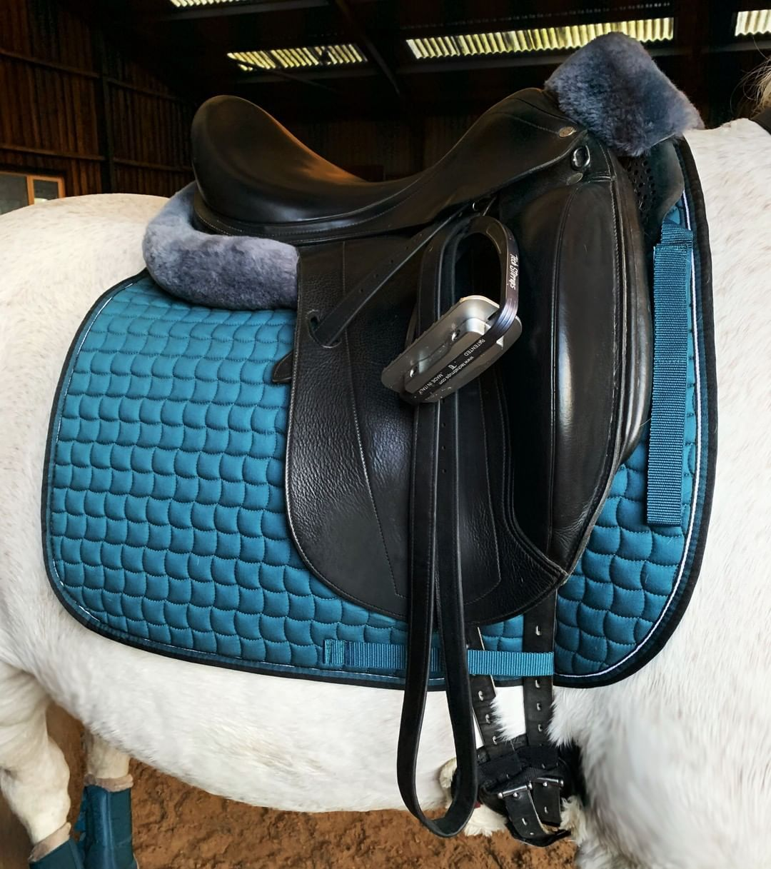 Dressageperformance Posted To Instagram Eskadron Tealblue Saddle Selleria Equipe Official Stirrups Horse Riding Outfit Dressage Dressage Horses