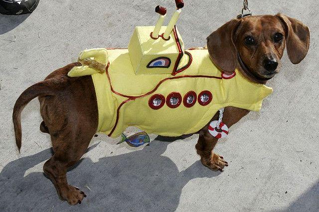 Yellow Submarine Costume For Slink Dog Costume Cute Animals