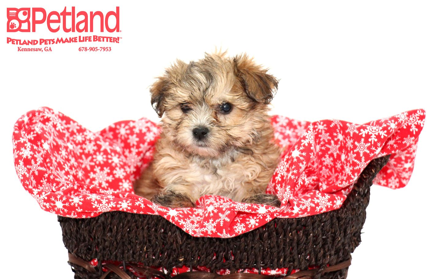 Dogs puppies for sale pets puppies dog adoption