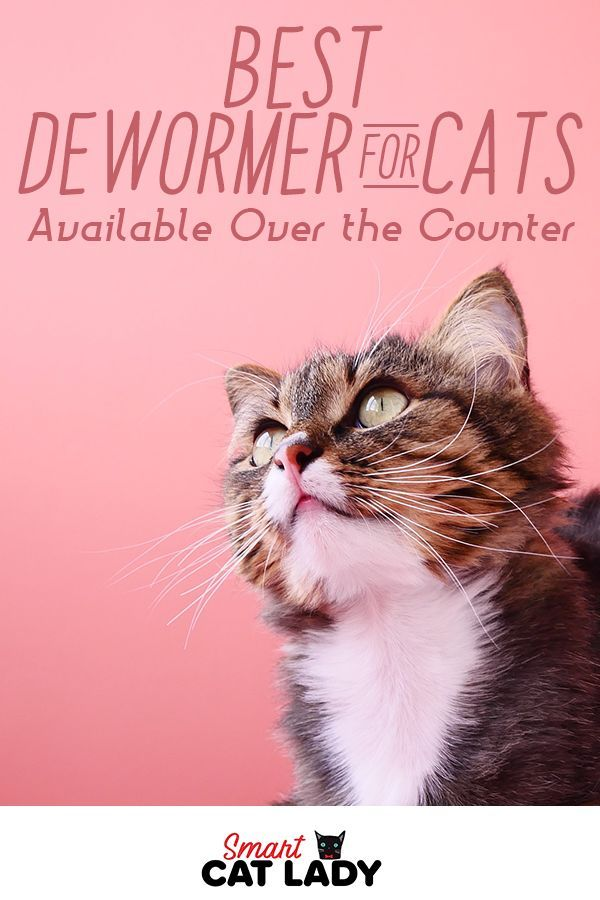 Best Dewormer for Cats Available Over the Counter Cats