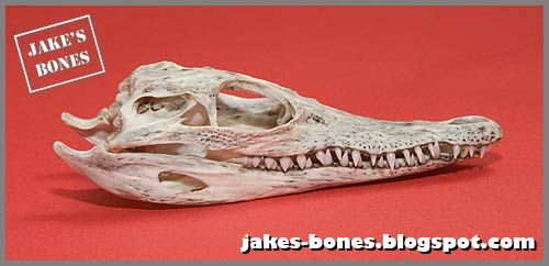 The blog of Jake, a fourteen year old bone collector, naturalist and ...