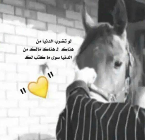 صور خيول مكتوب عليها كلام جميل فوتوجرافر Talking Quotes Photo Quotes Cute Profile Pictures