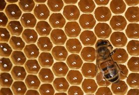 Hexagons In The Real World real life example of a...