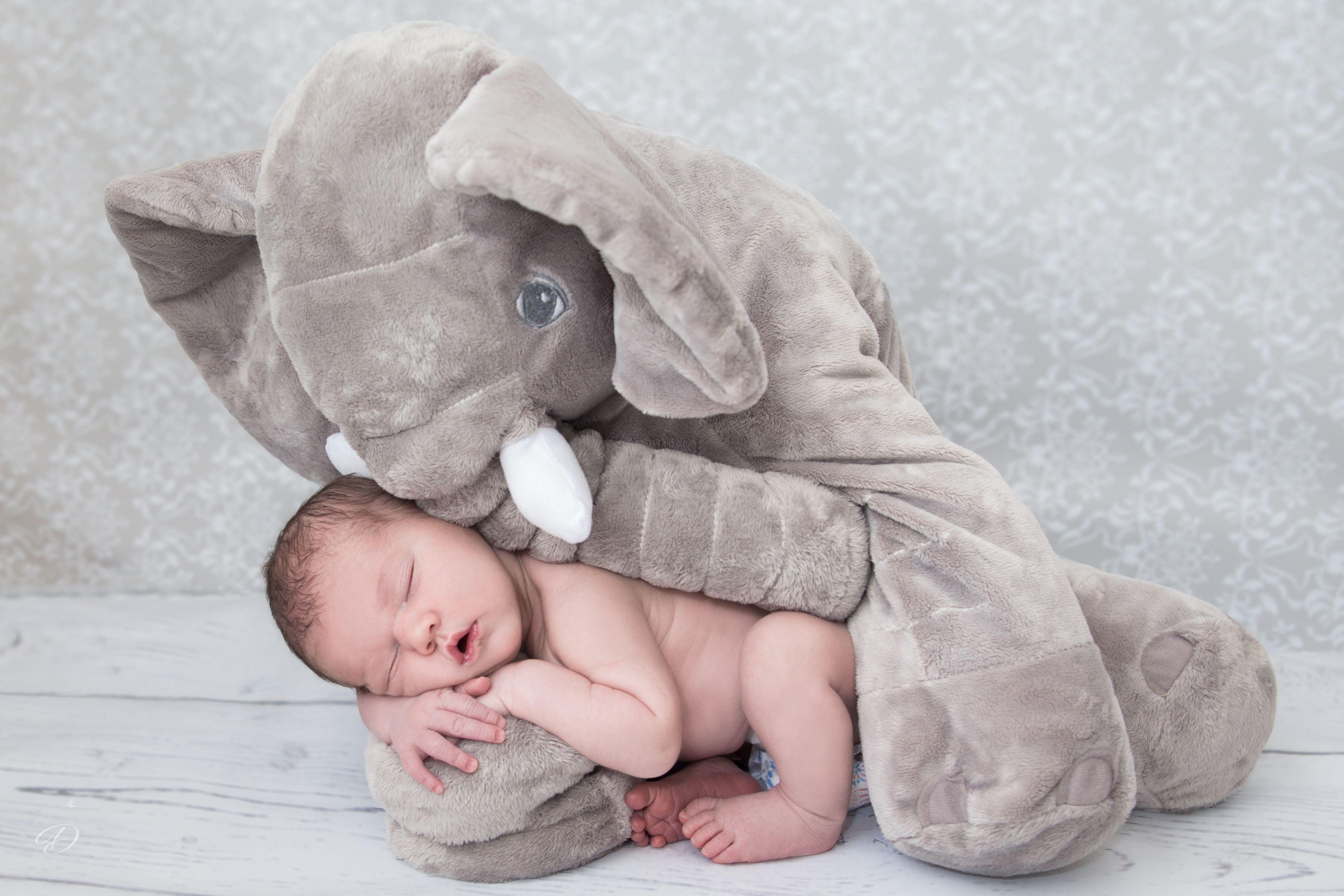 Newborn elephant by @drymaia02