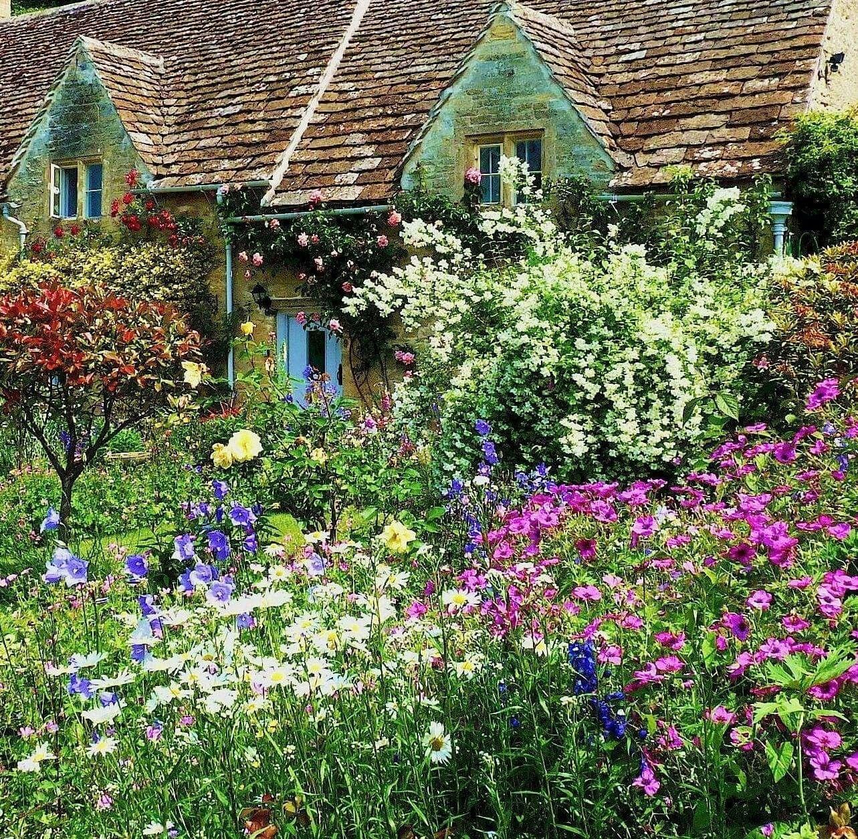 Garden Cottage: Different Garden Plants