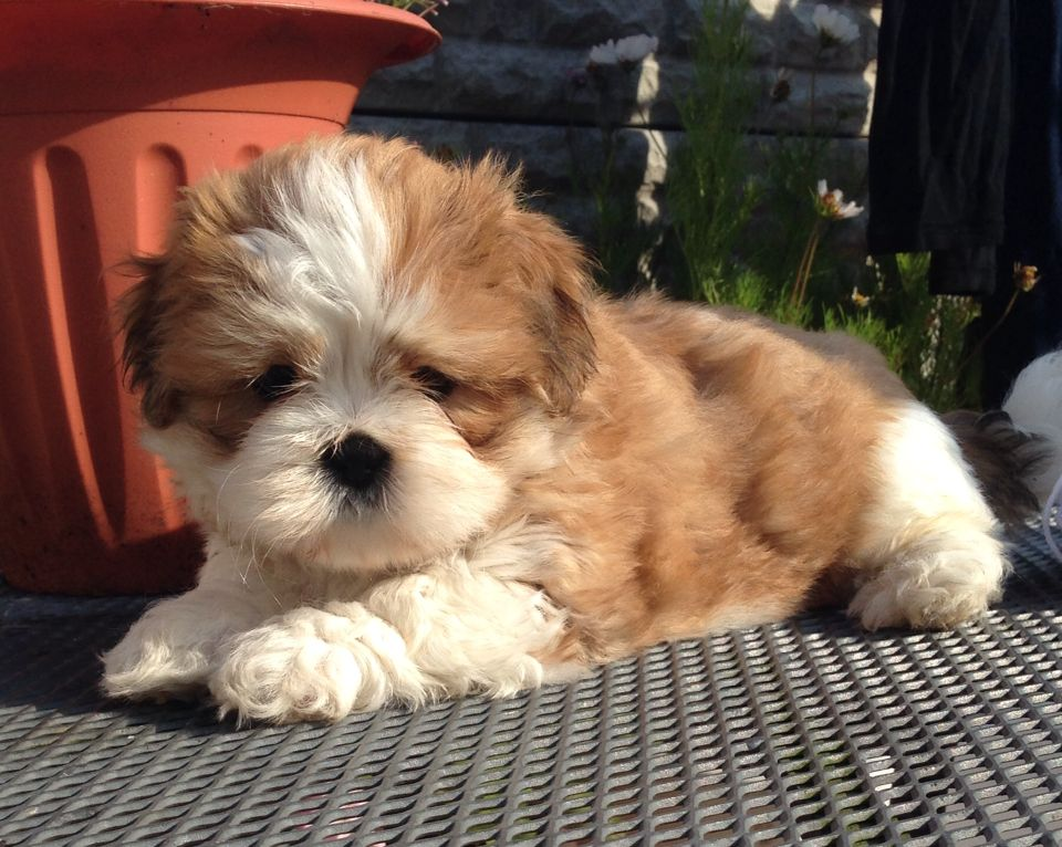Ozzy my new puppy xx