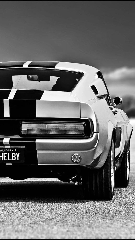 Beautiful Shelby close-up shot – love the black and white photo on this sweet mu…