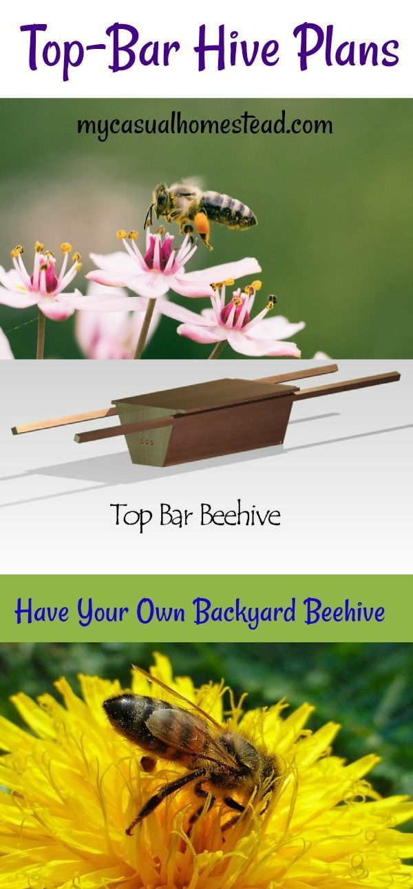 Top-Bar Beehive Plans | Top bar bee hive, Backyard beehive ...