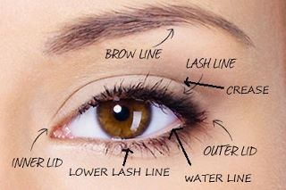 Eye diagram make up pinterest diagram eye and makeup eye diagram makeup artist ccuart