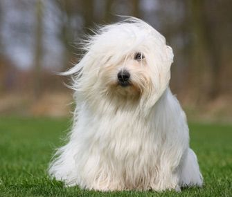 Two New Breeds Join Westminster The Westminster Kennel Club Said
