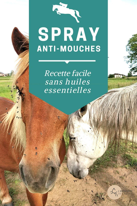 Stop Aux Mouches Avec Ce Spray Diy Pour Les Chevaux En 2020 Cheval Soins Des Chevaux Mouches