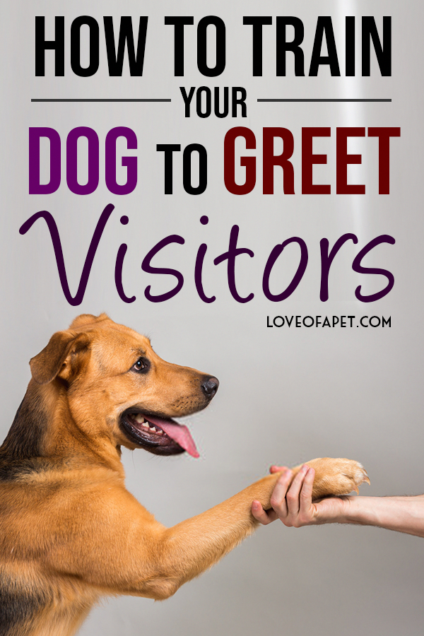 Awesome Dog Training Methods In 2020 Dog Training Dog Training Tips Easiest Dogs To Train