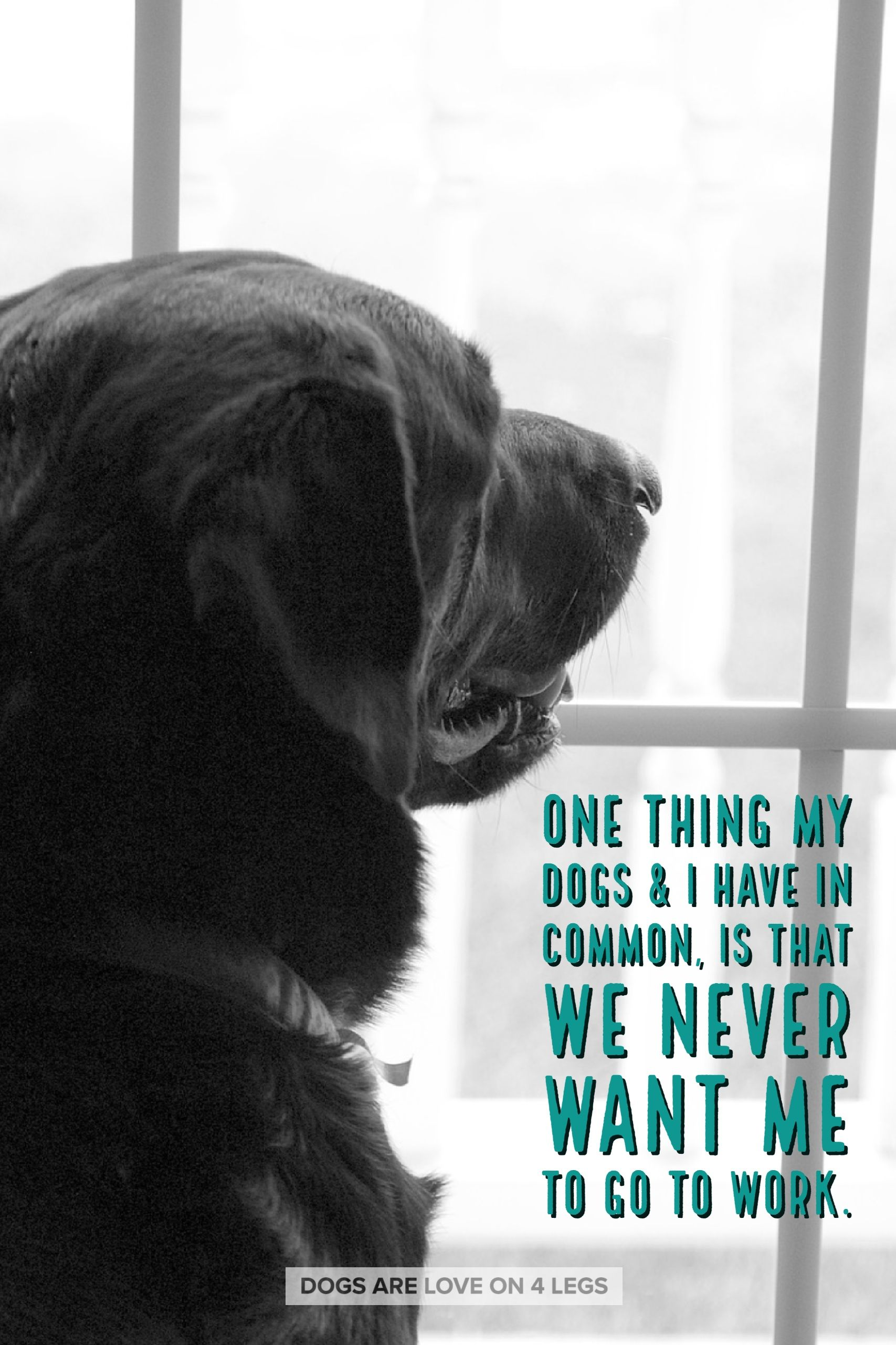 One Thing My Dog I Have In Common Dog Dog Quotes Inspirational Quotes Funny Quotes Life Quotes Dog Quotes Funny Dog Quotes I Love Dogs