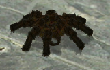 Spinnensimulation für den PC