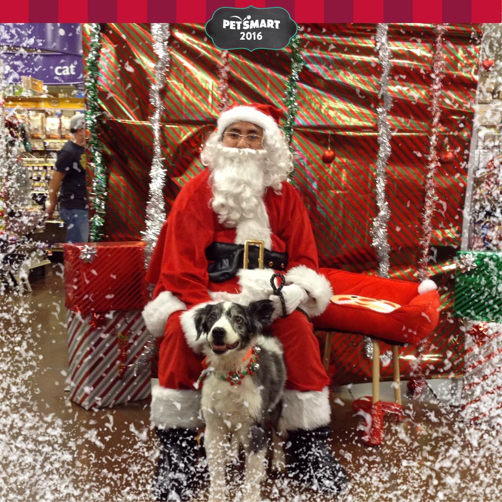 Dog Santa Pictures Petsmart 2016