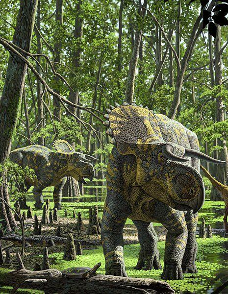 Nasutoceratops lebte vor circa 76 Millionen Jahren und ist ein typischer... #dinosaurillustration