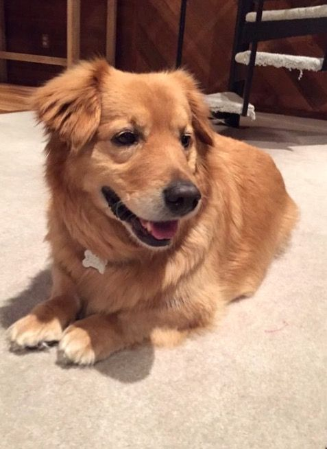 19 Corgi Mixes That Will Make You Audibly Aww With Adoration