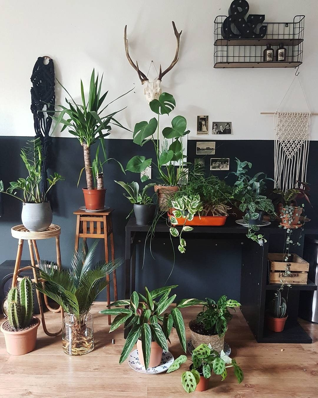 Plants For Living Room Urban Jungle Living Room Ideas Boho Plants Deco Vtwonen