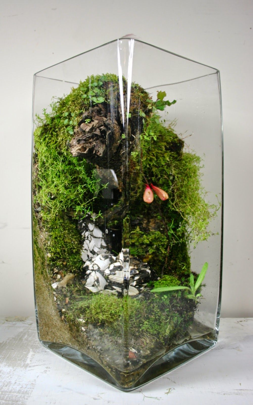 The slug and the squirrel design terrariums pinterest the o