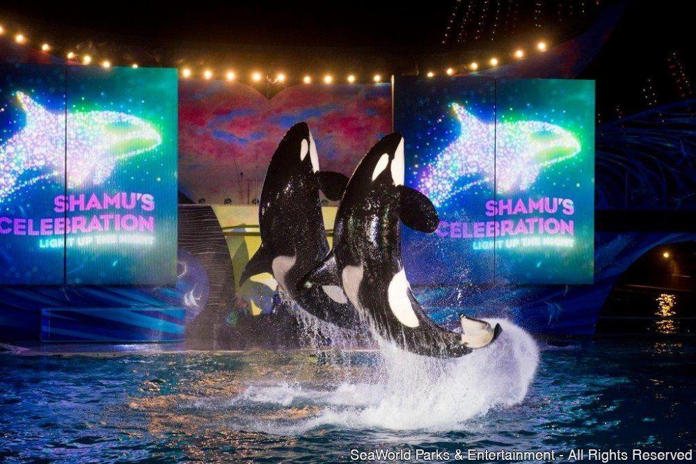 SeaWorld Orlando apresenta nova série de espetáculos musicais de diferentes gêneros; Aquatica terá festas de arrasar ORLANDO, FL (16 de Junho de 2015) - Neste verão no hemisfério norte, assim que o sol se pôr, a diversão virá à tona no SeaWorld e no...