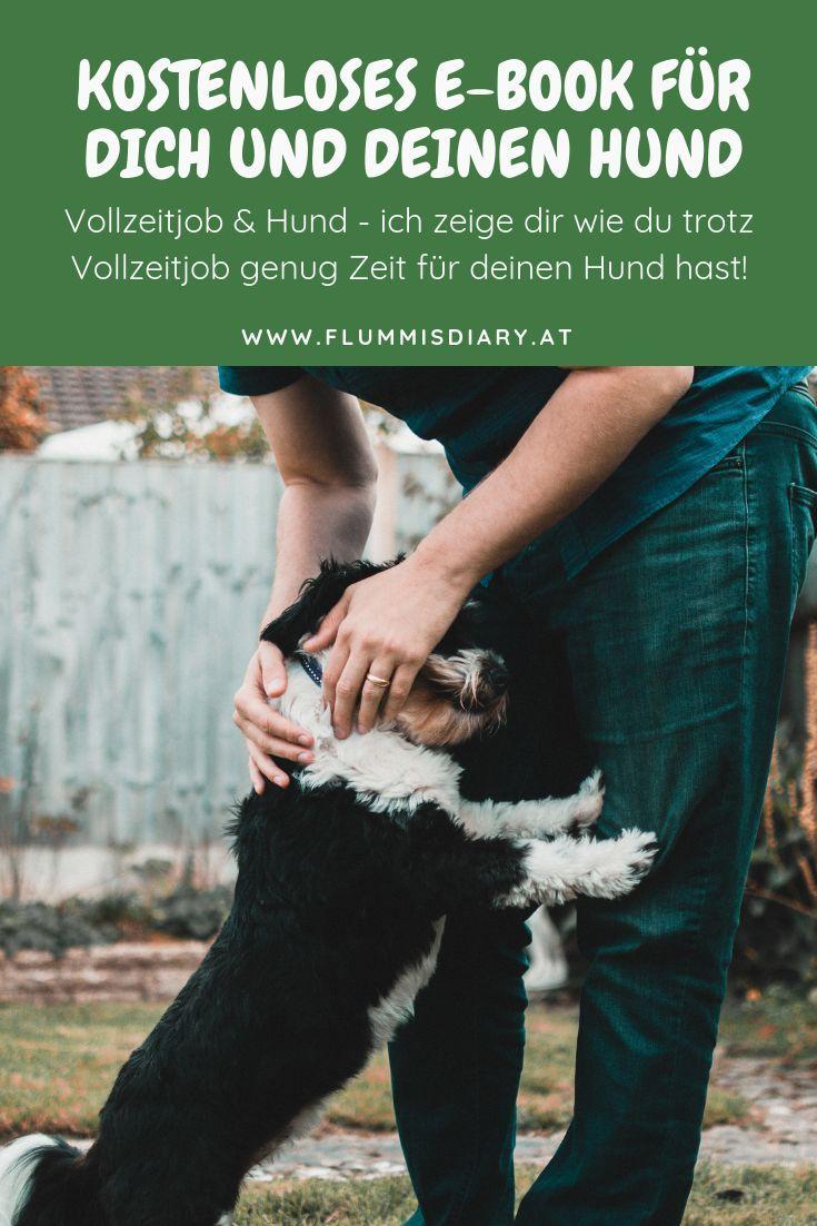Mit Diesem Gratis E Book Erhaltst Du Erste Einblicke In Das Leben Mit Hund Denn Eine Erfolgreiche Karriere Und Ein Ausgeglichener Hund In 2020 Hunde Job Hundetraining