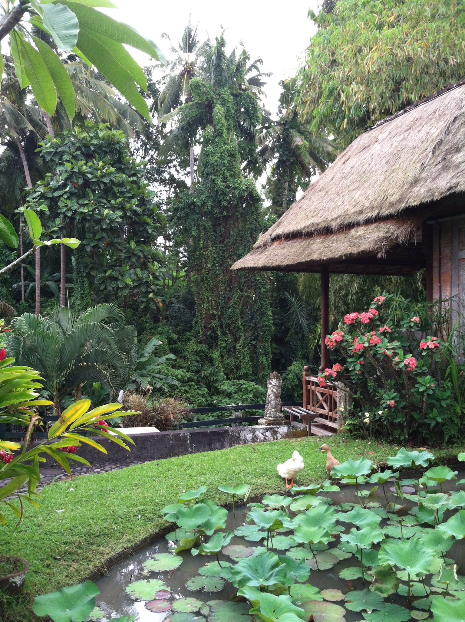 Restaurant garden in Ubud Bali | Beautiful Bali | Pinterest | Ubud ...