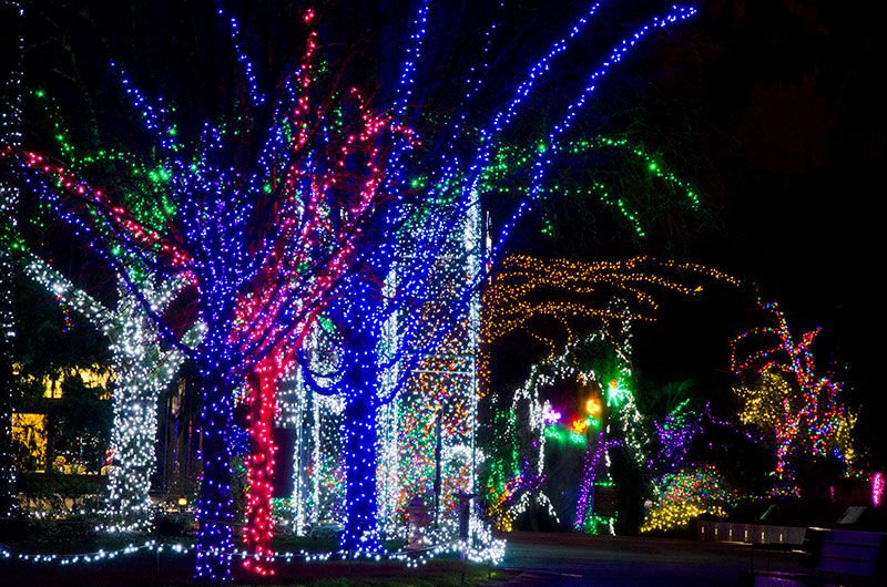 Woodland Park Zoo Home Woodland Park Zoo Seattle Wa Seattle Christmas Zoo Lights Seattle Events