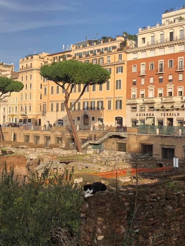 Cat from Rome {Italy}