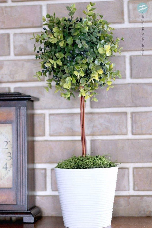 elegant tropiary trees ideas for outdoor and indoor garden