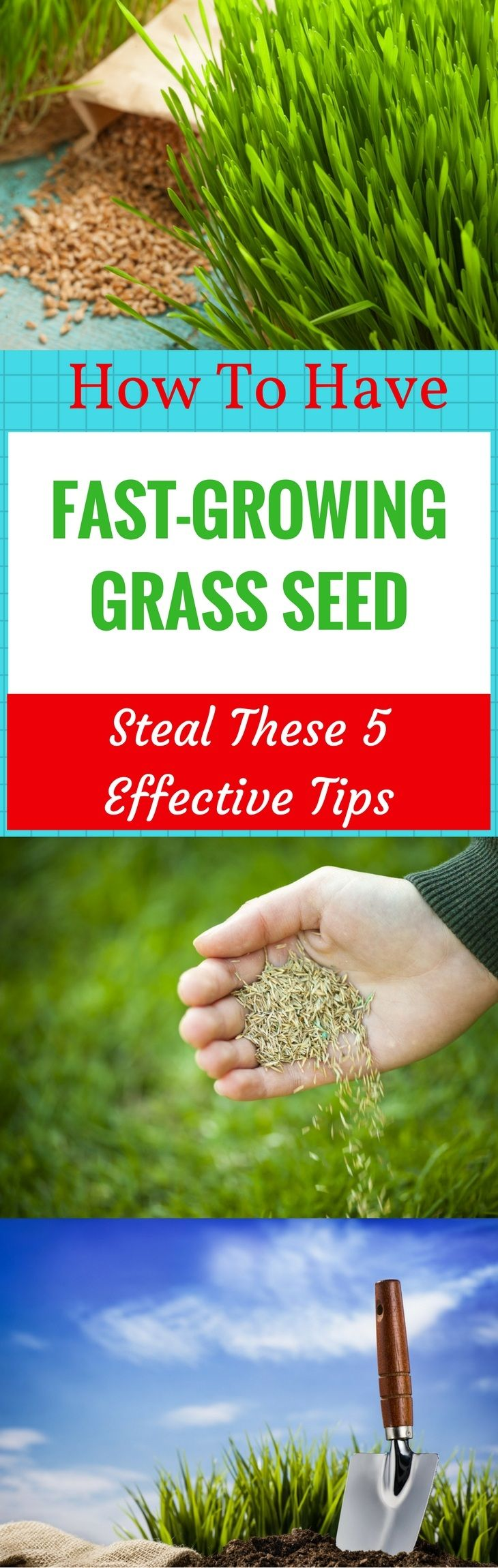 How to have fastgrowing grass seed steal these 5