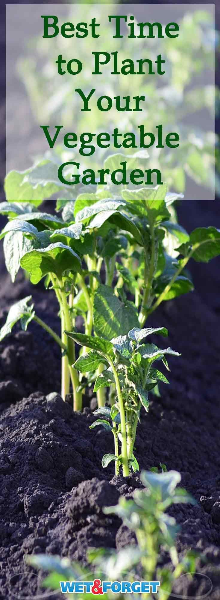 The Best Time to Plant your Vegetable Garden for an Optimum Harvest  Many vegetables require different weather for planting Find out when the best time is to plant you