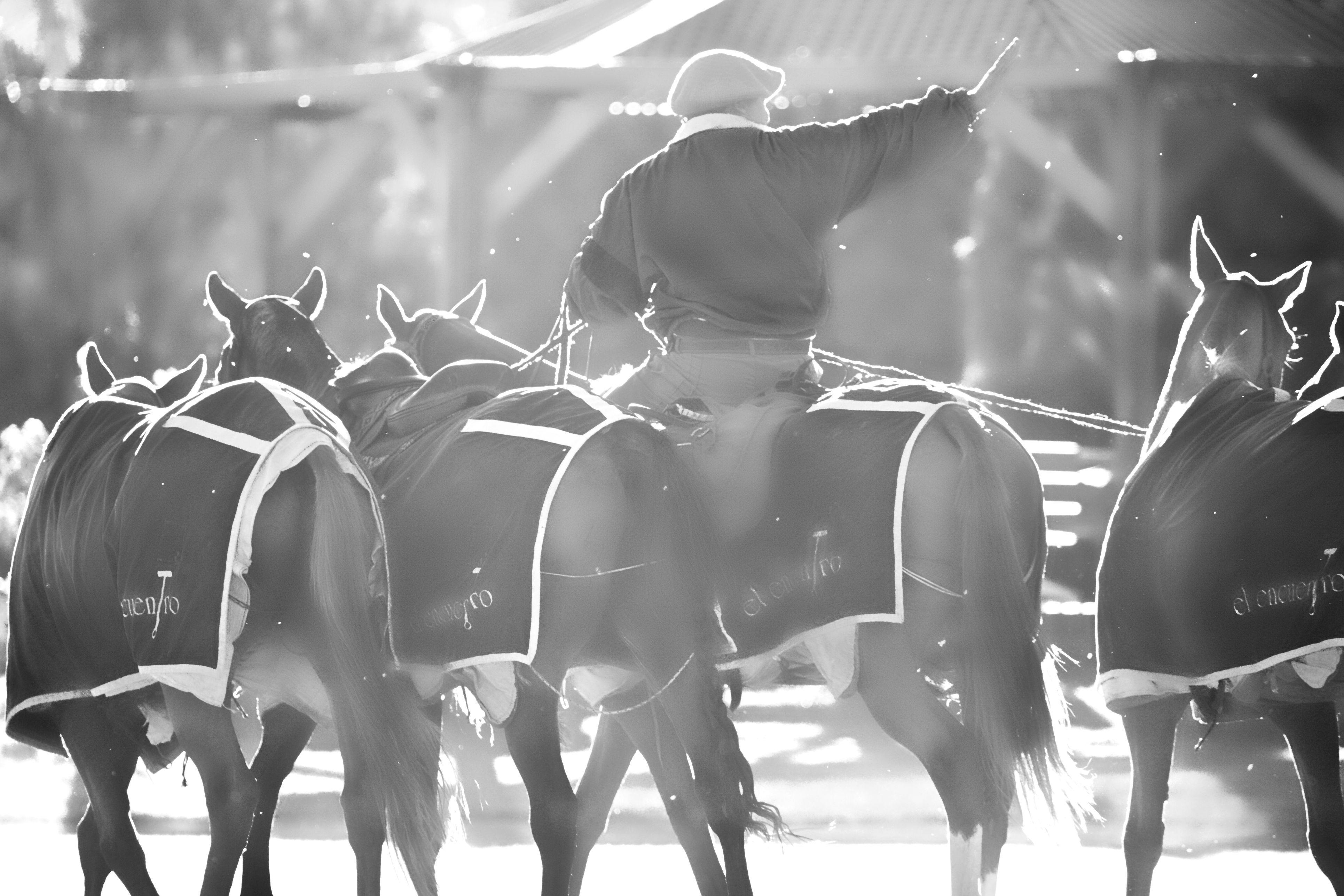 san diego polo club buenos aires argentina polo horse polo pony polo club pinterest