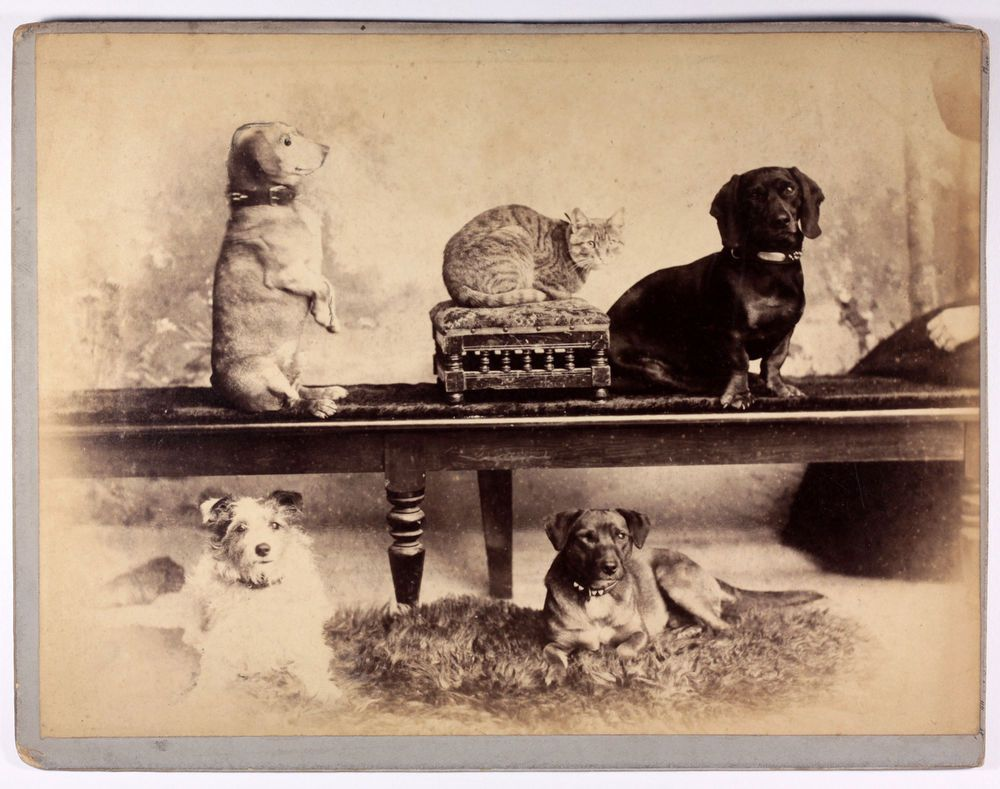 Old Antique 19th Century Photo Dogs And Cat Mayson S Keswick Pets