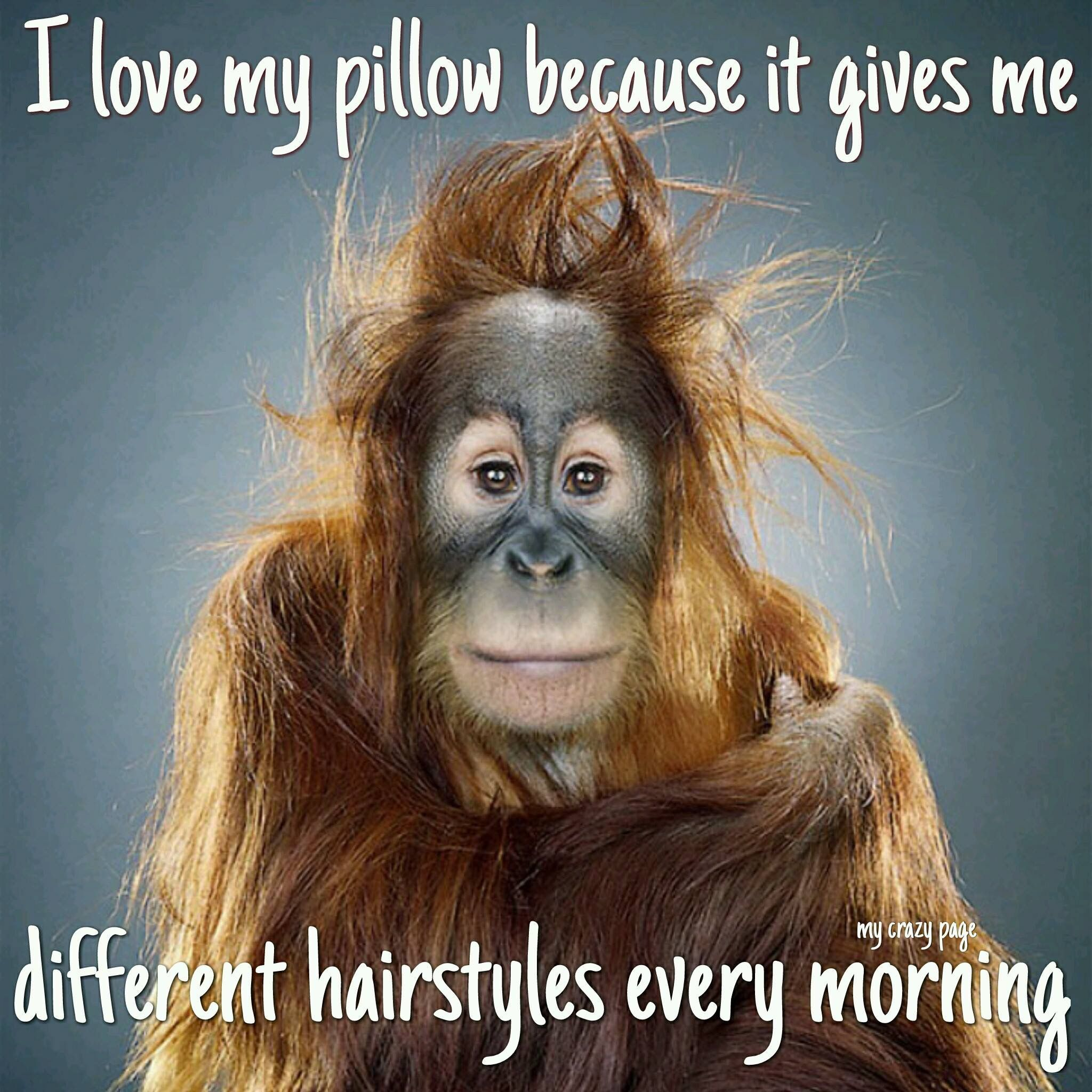 Pin By Linda Crews On Funny Pictures Morning Quotes Funny Funny Animal Faces Funny Good Morning Memes