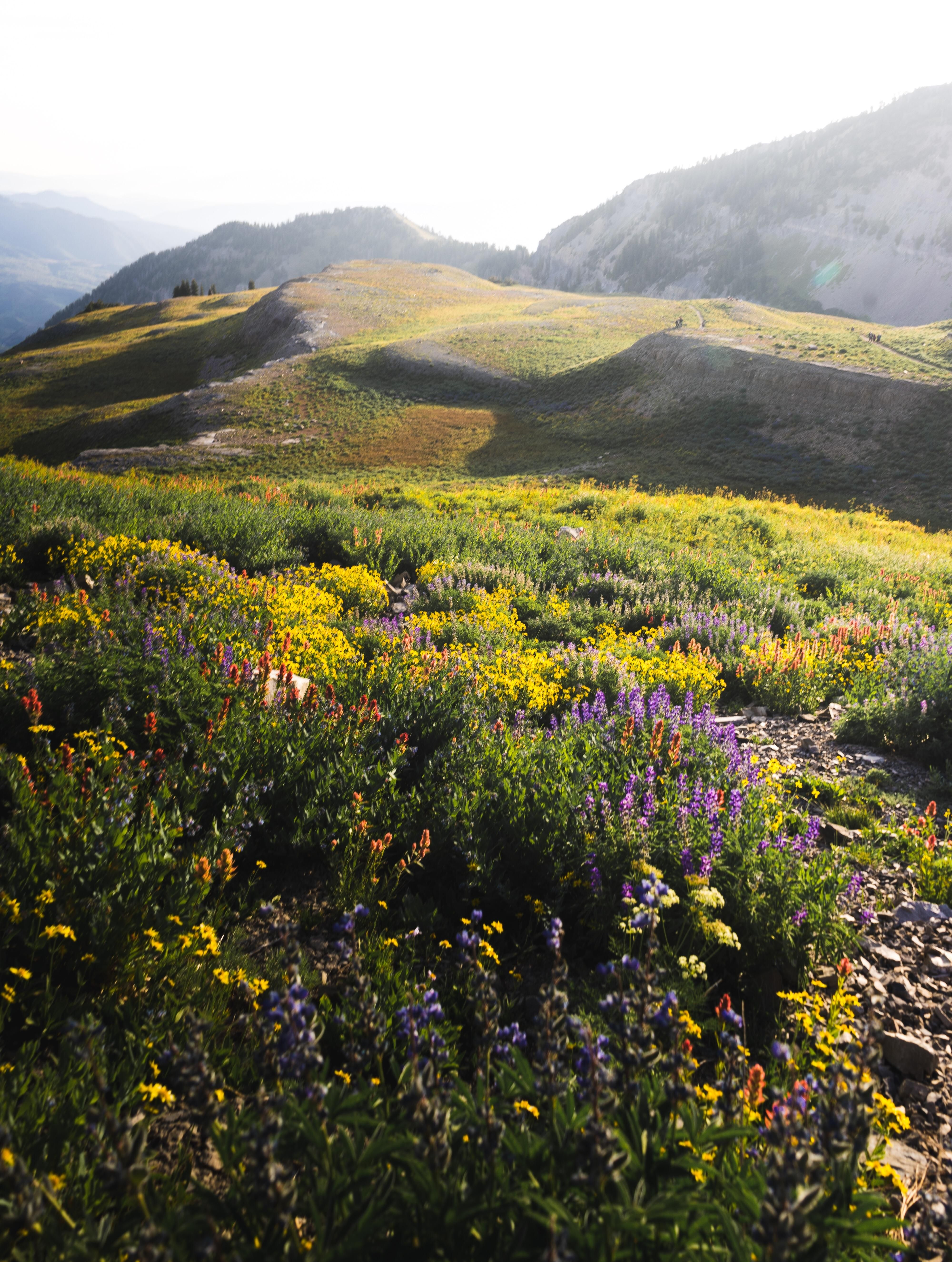 A patch of wildflowers still thriving up at high altitude