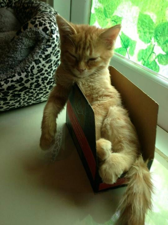 ..a new twist on box obsession!
