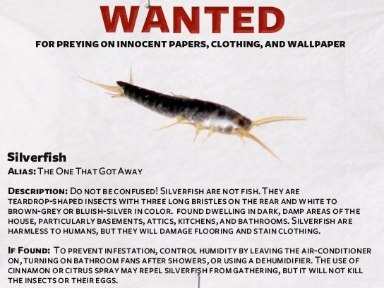 Silverfish Wanted Poster