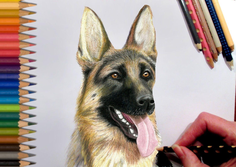 Drawing German Shepherd In Colored Pencil Speed Draw Jasmina Susak German Shepherd Pencil Art Drawings Drawings