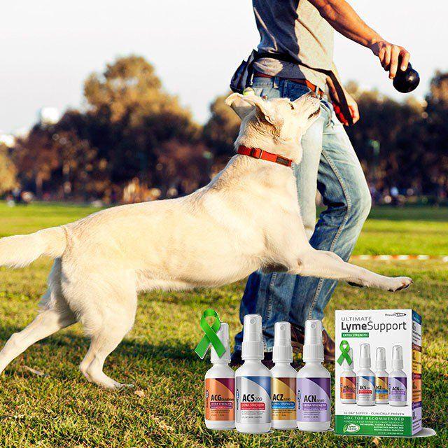Lyme Now on   Dog training near me, Dog training Belgium