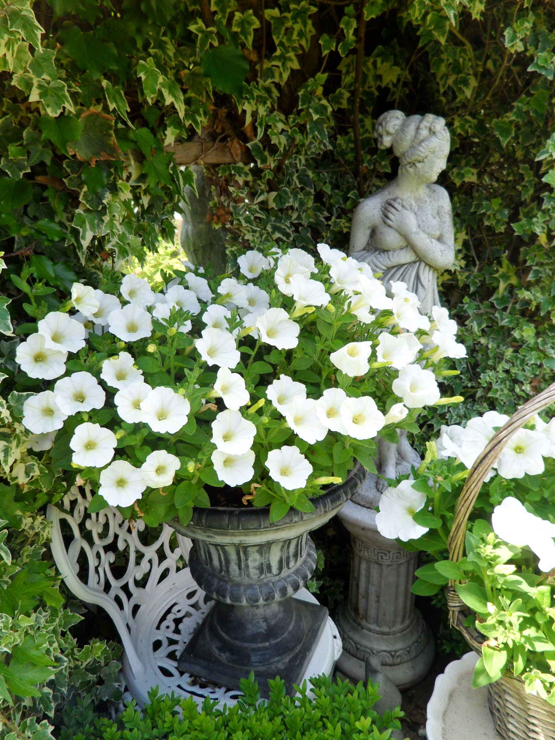 Garden Container Flowers Simply Stunning White Petunias Annuals
