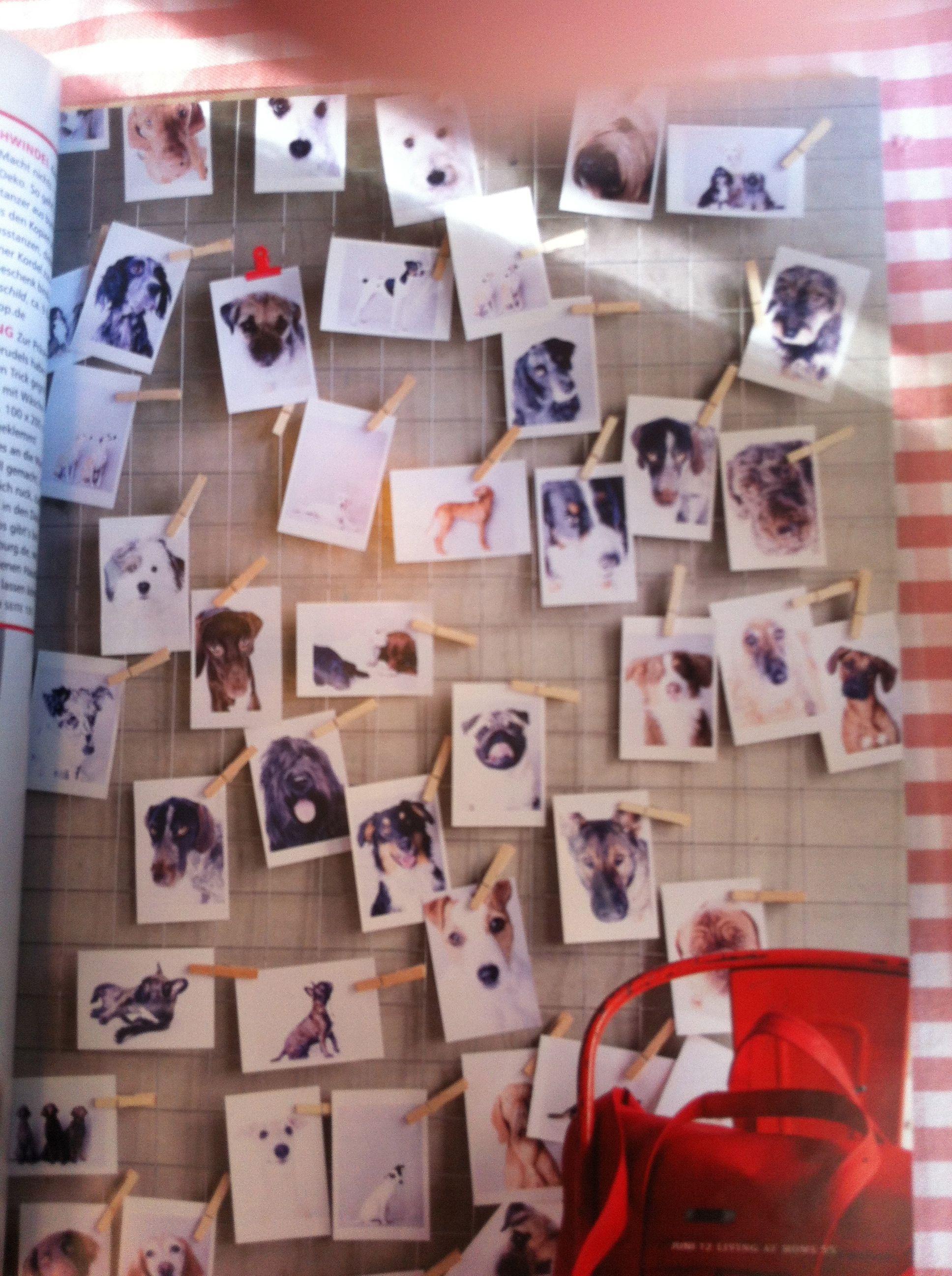 Hunde Polaroid Fotowand