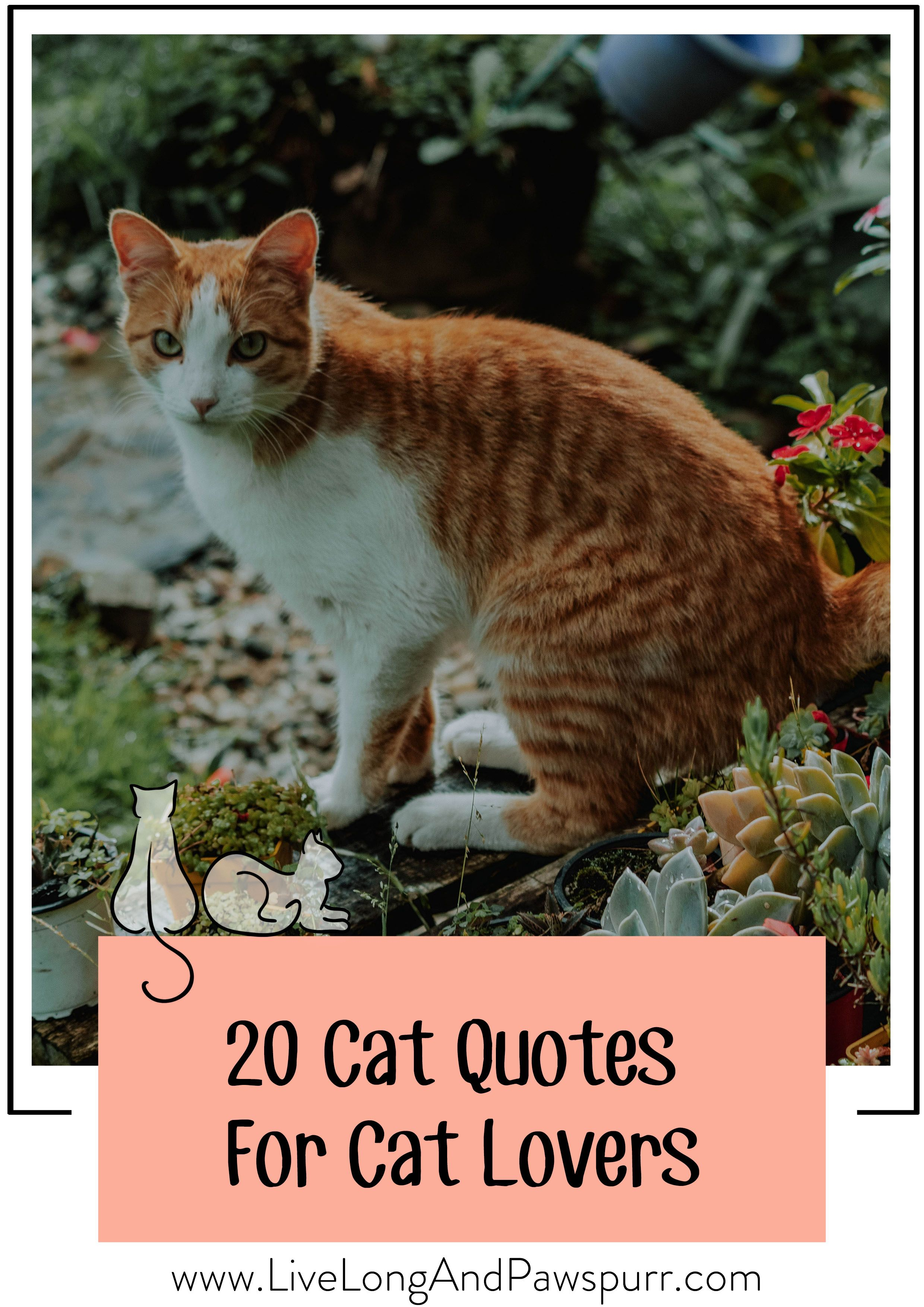 20 Cat Quotes That Will Melt Your Heart Live Long And Pawspurr In 2020 Kitten Quotes Cat Quotes Cat Lover Quote