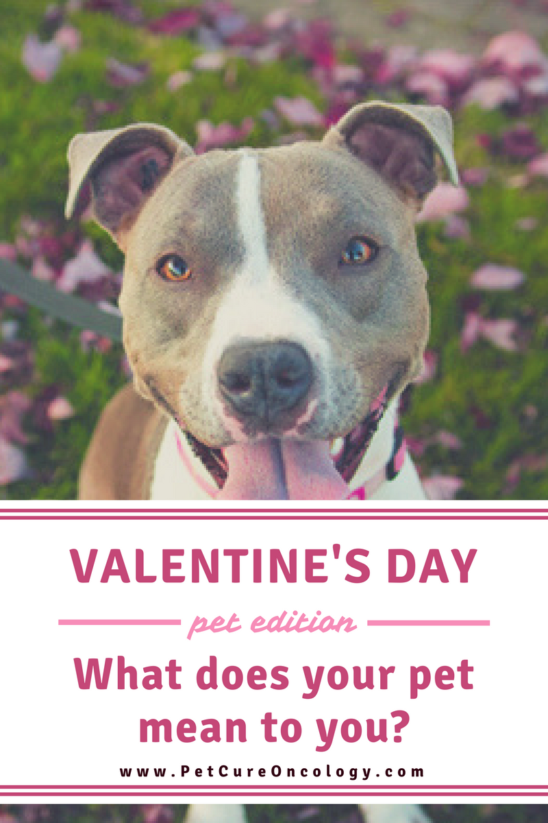 Valentine S Day What Does Your Pet Mean To You Pets Your Pet