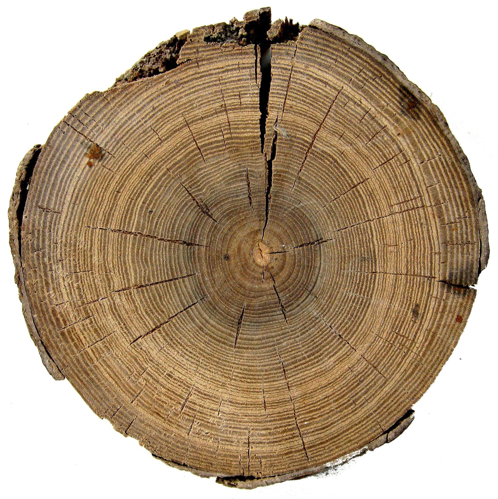 участки перед спил дерева в картинках конструкция подразумевает наличие