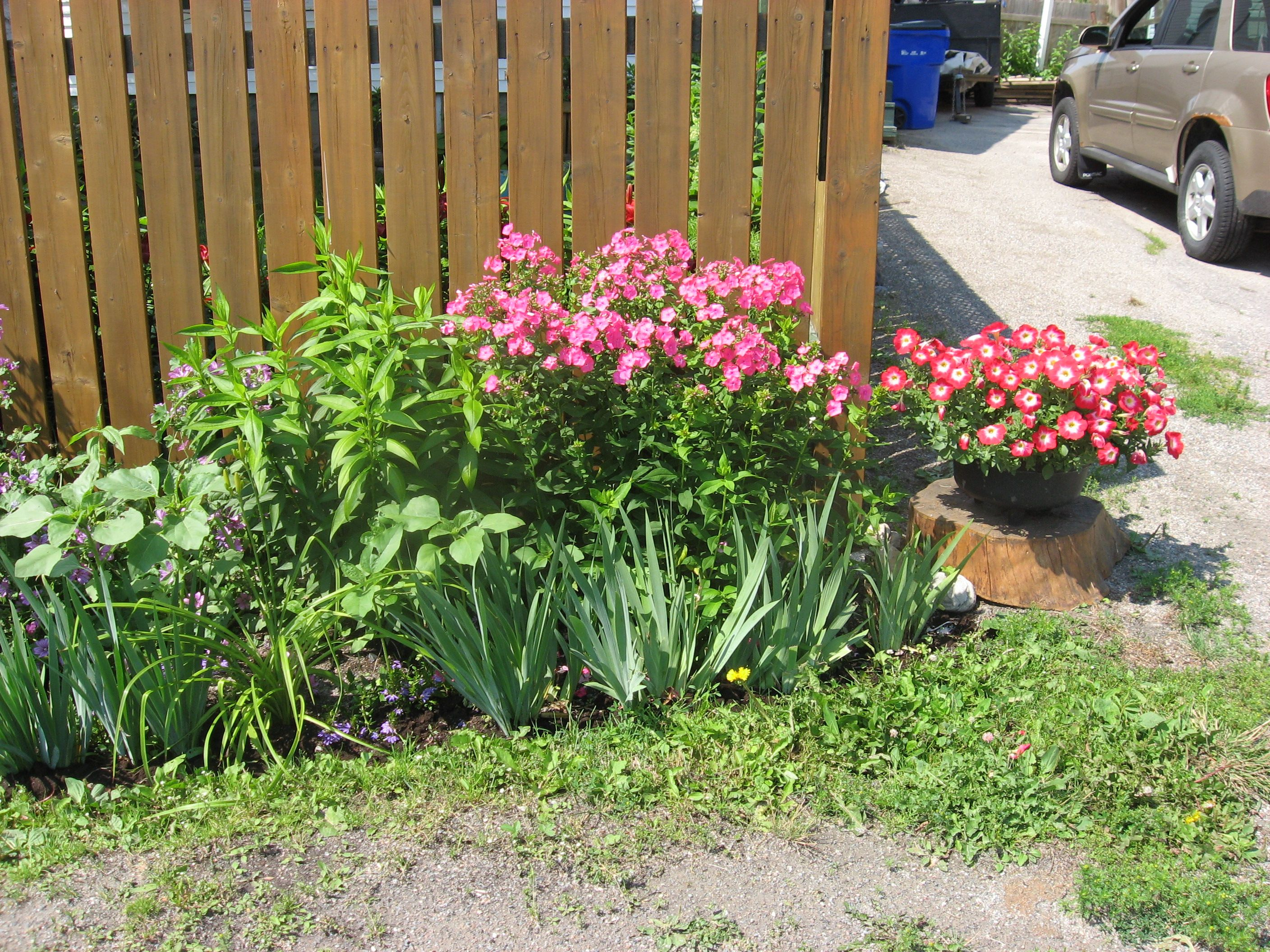 Porcupine and Timmins Ontario - Flowers that can survive ...