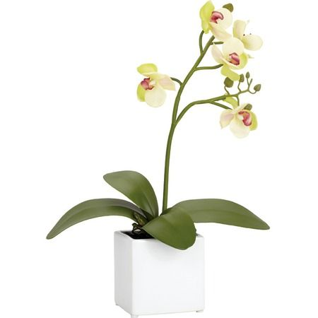 I pinned this Faux Orchid Arrangement V from the Torre & Tagus event at Joss and Main!