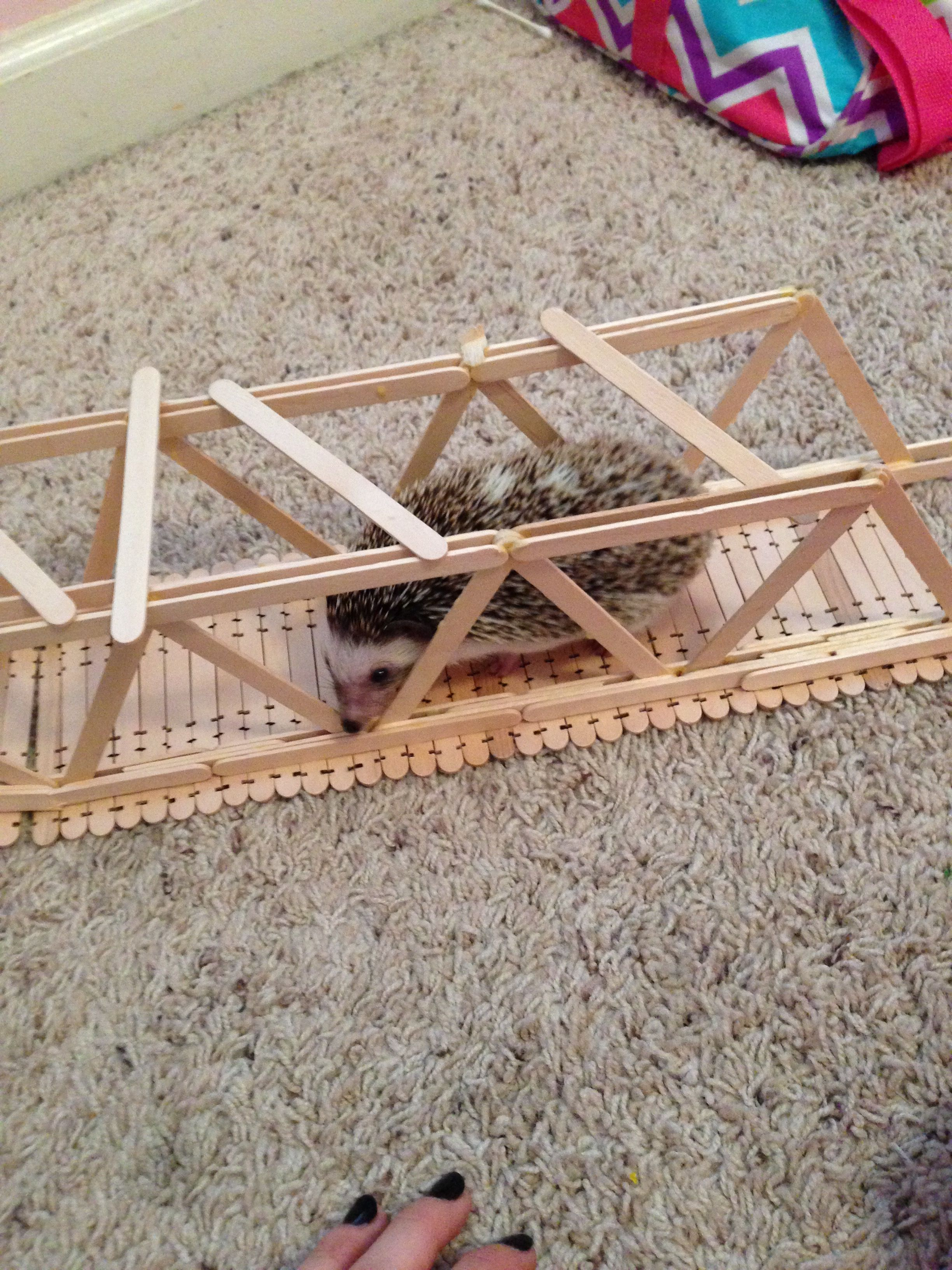 My Hedgehog Loves Bridges Love Bridge Hedgehog My Love