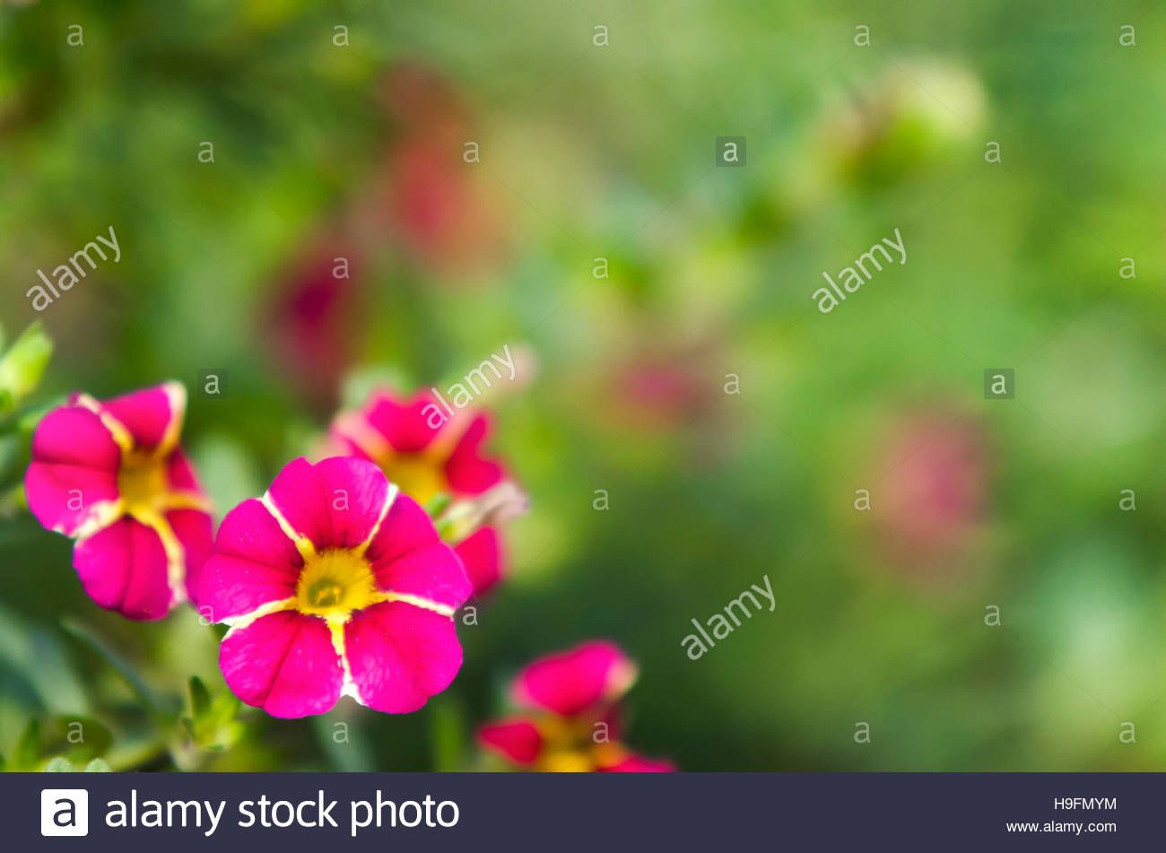 Download this stock image pink and green floral background hfmym